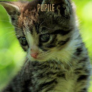 pupile1